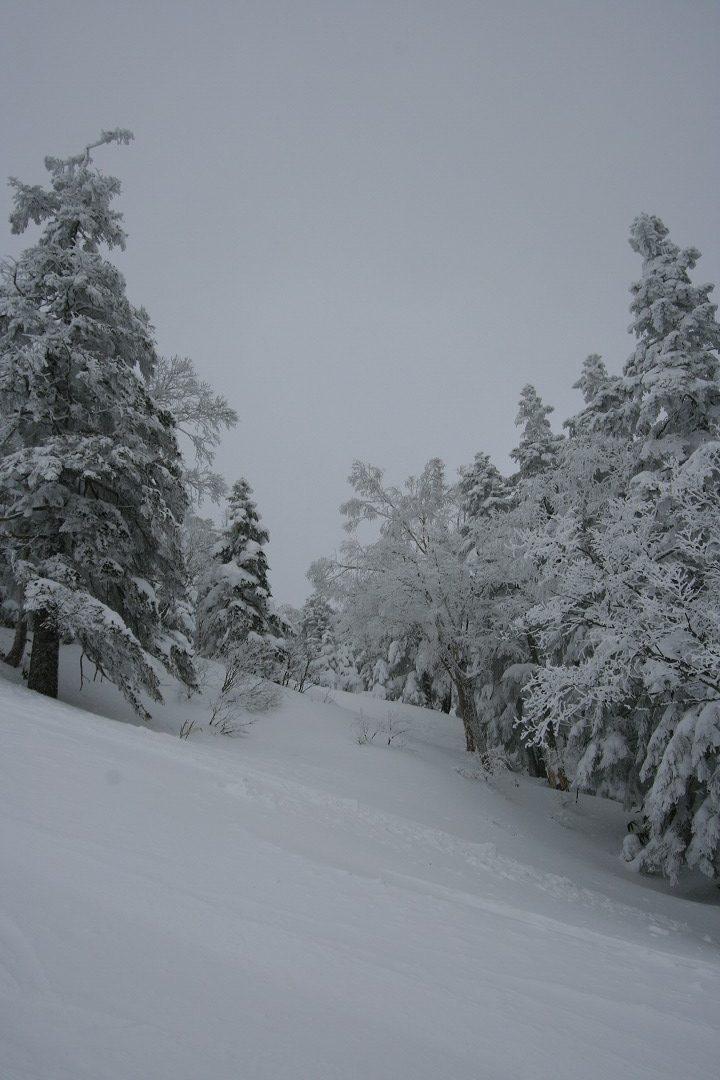 森の道だよ