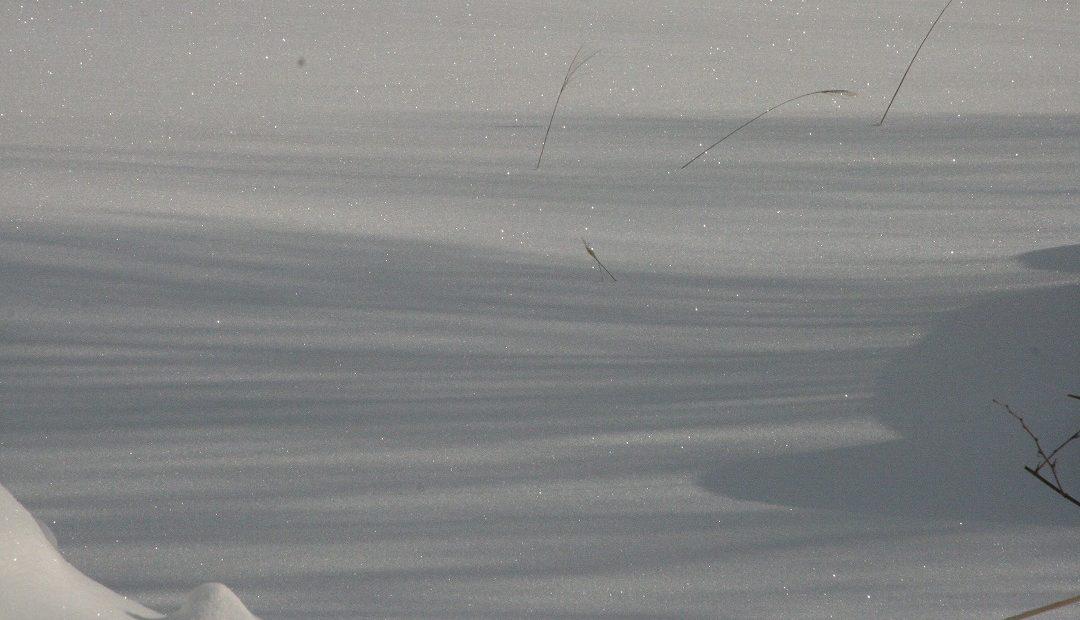 キラキラ雪原だよ